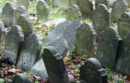 pet-cemetery-waspv2.jpg