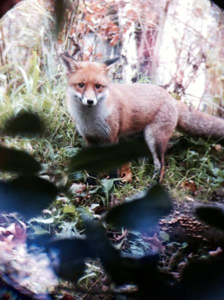 13.photo fox 23_12_14.jpg