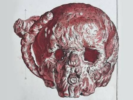 mineralised-skull-in-book_700_2.jpg