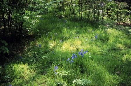 20150508-3. woodland glade 2003 1.jpg