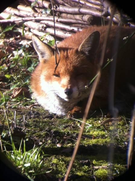 20150508-8.fox.jpg