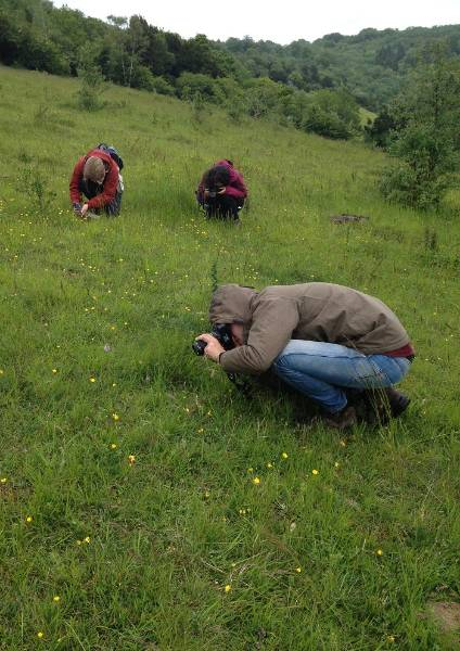Photographing Common spotted orchids at Box Hill.JPG