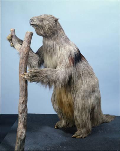 NaturePlus: Nature Live : Tags : giant_ground_sloth