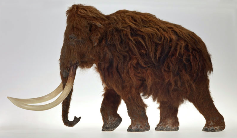 Apr 01, · New York City's American Museum of Natural History is a national treasure, attracting four million visitors annually. Its dioramas-a dazzling mixture of nature, science, and art-have inspired young and old alike, and are world-renowned examples of .