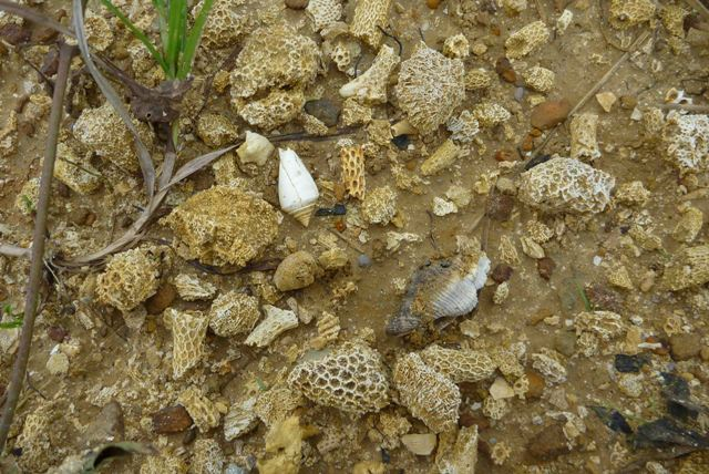 Natureplus Hunting Fossils In Indonesia Tags Corals