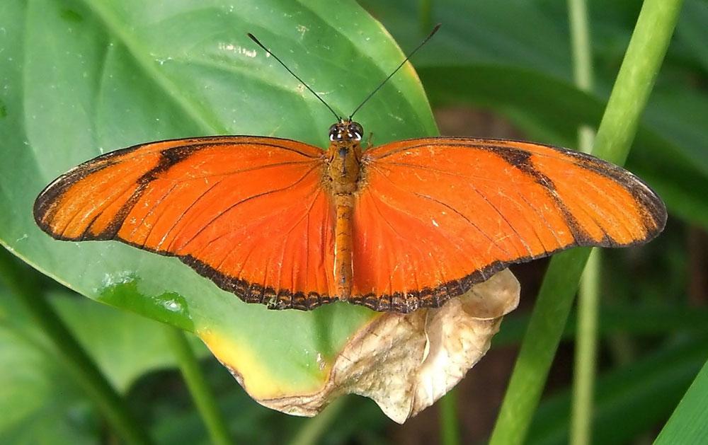 Orange Butterfly Species