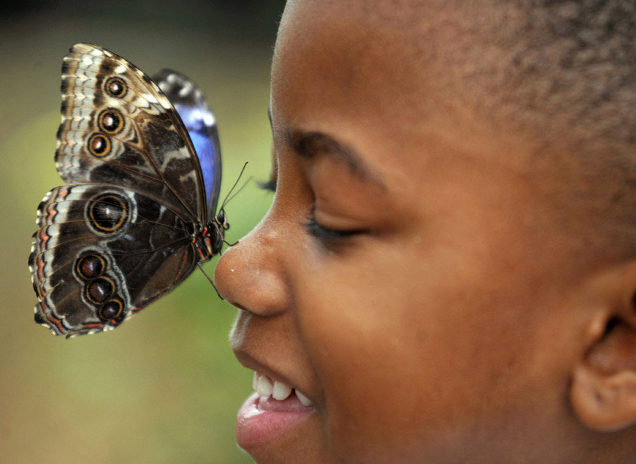 Image result for kid looking at butterfly