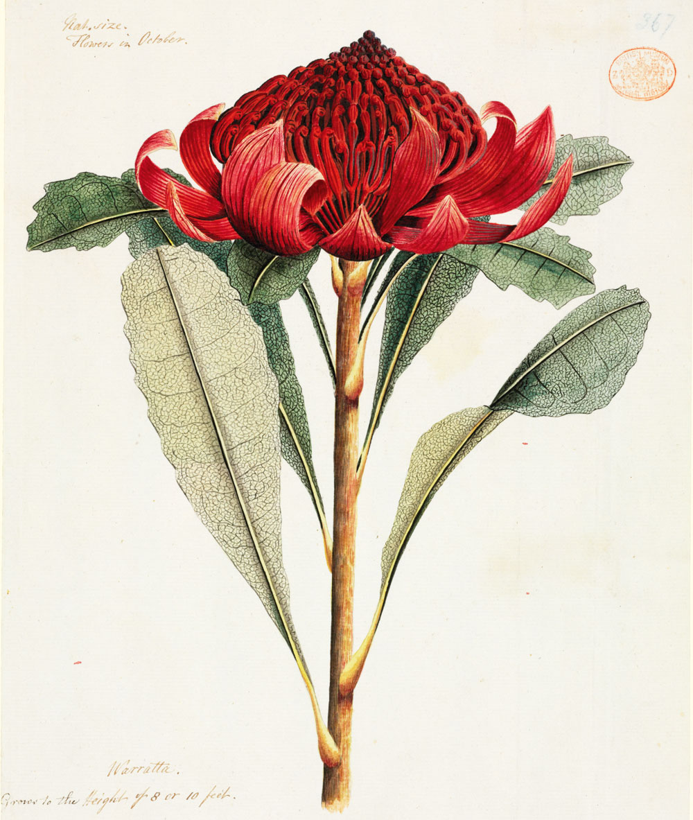 1000 images about art botanical sketches on pinterest for Botanic fleurs artificielles