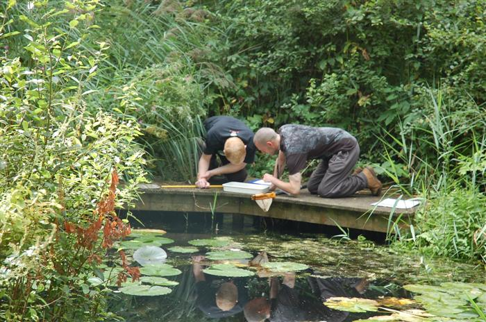Natureplus wildlife garden blog tags ponds for Garden pond life