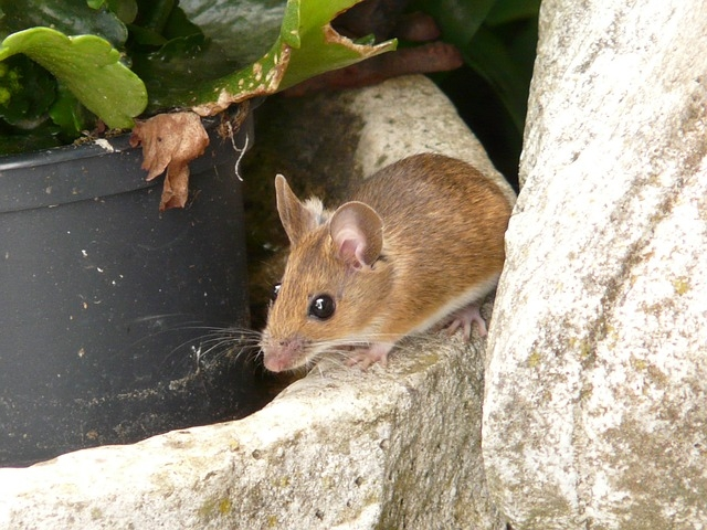 Natureplus Wildlife Garden Blog Many Mice
