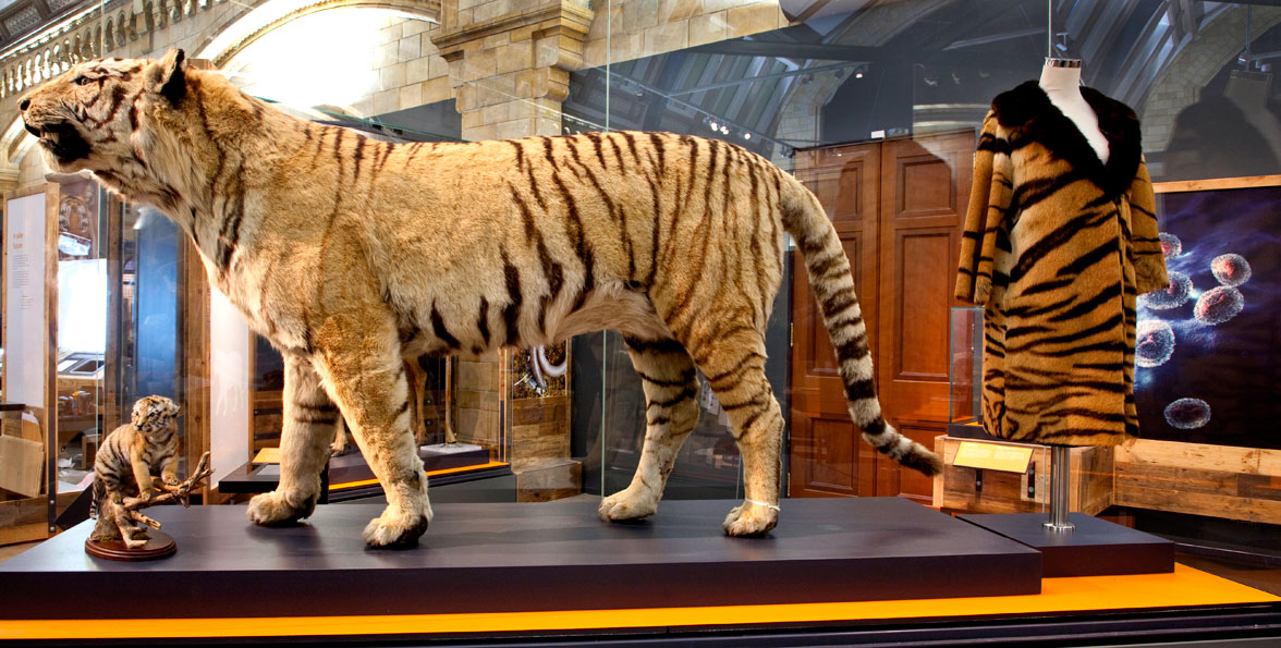 Real White Tiger Fur Coat Tradingbasis
