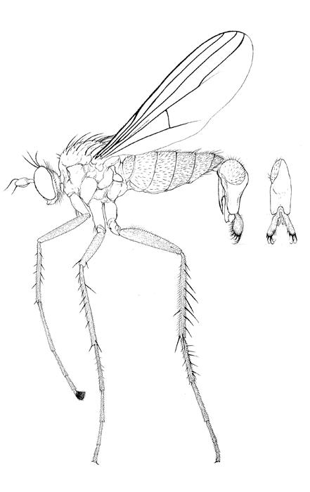 Natureplus Curator Of Dipteras Blog Tags Craneflies