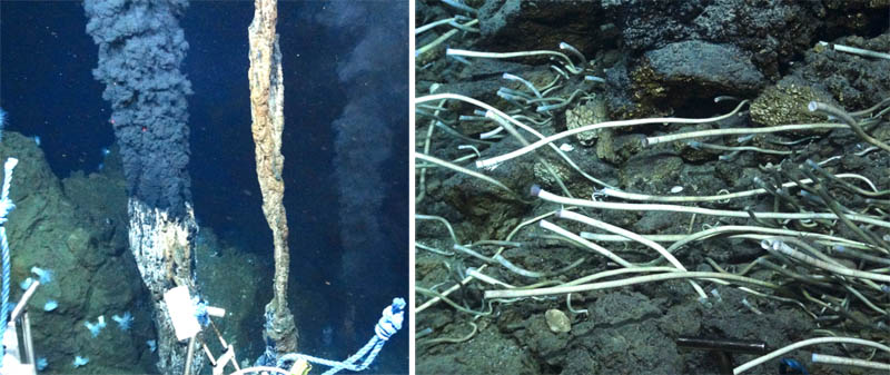 organism hydrothermal vent engages chemosynthesis Hydrothermal vents and chemosynthesis: a habitat in the dark what do organisms in hydrothermal vents depend upon for energy what is chemosynthesis.