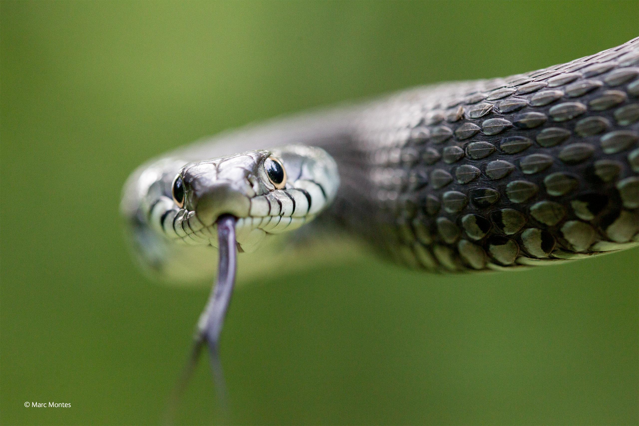 Snake eyes face revealed