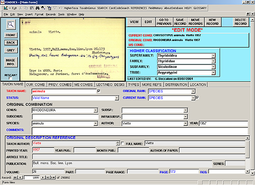 The main data form of the Viadocs Nomenclatural Database System, displaying a record for a species name.