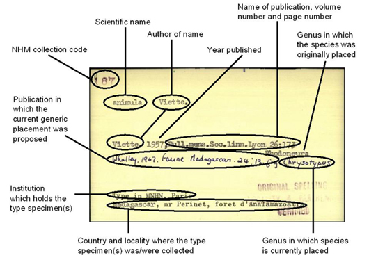 A representative index card for a species name, showing how information is typically arranged.