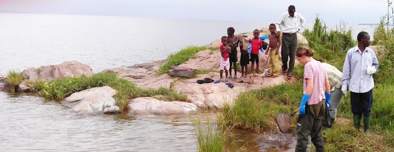 Anouk Gouvras and colleagues collecting aquatic snails along the banks of Lake Victoria
