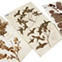 Joseph Banks' herbarium sheet