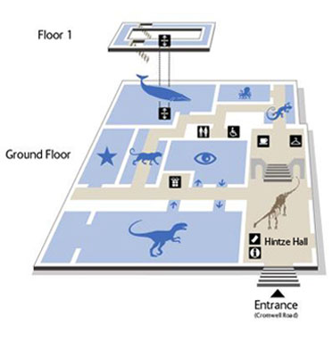 Blue Zone Floor Plan