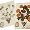 George Clifford's herbarium sheet