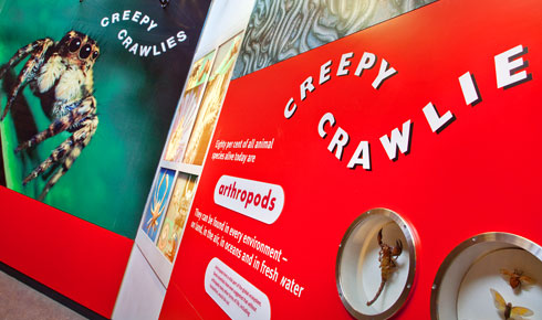 Entrance to the Creepy Crawlies gallery.