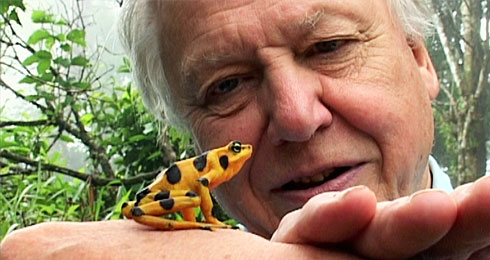 David Attenborough and frog