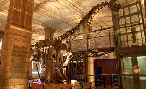 Dinosaurs gallery entrance