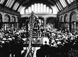 Dippy's presentation ceremony, May 1905.