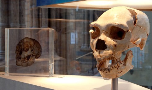 Early Neanderthal skull