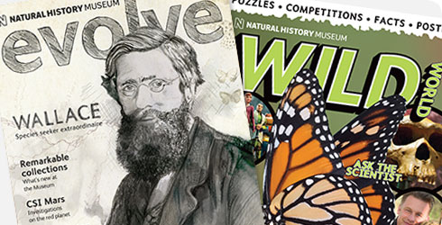 Evolve issue 15 and Wild World issue 4