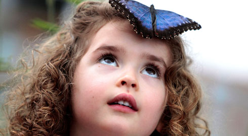 Blue morpho butterfly-landing on girl's head