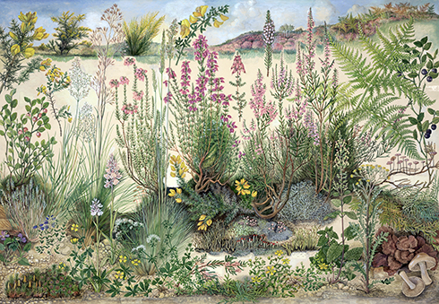 Heathland by Barbara Nicholson