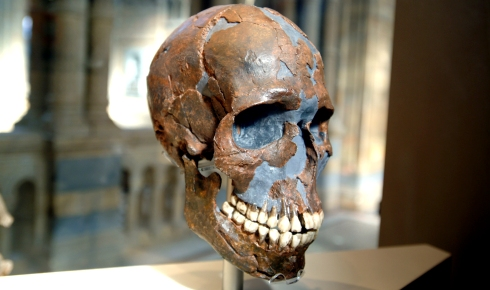 Skull of an early modern human.
