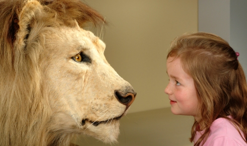 Face to face with a lion in the mammals gallery.