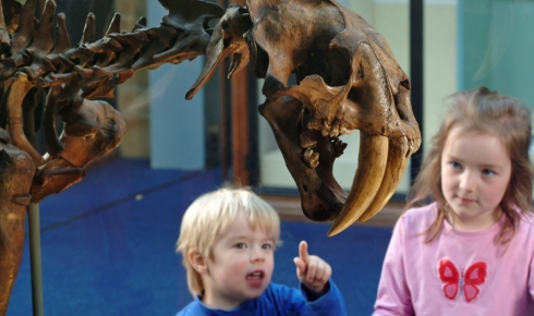Child looking at the skeleton of an extinct sabre-toothed cat.