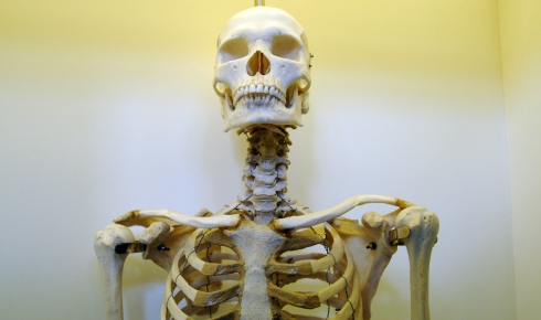 Human skeleton shows how our bones and muscles work.
