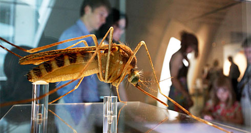 Close-up of a mosquito model in Cocoon