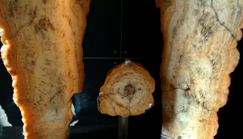 Cross section of a stalagmite.