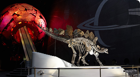Stegosaurus in the Earth Hall