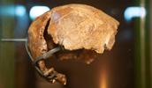 Swanscombe Neanderthal skull