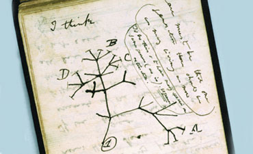 Darwin's iconic tree of life diagram