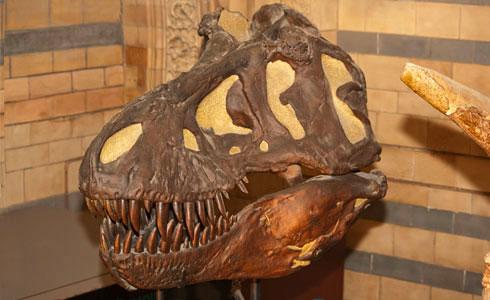 Dinosaurs gallery skull