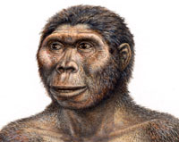 Illustration of what Australopithecus afarensis might have looked like