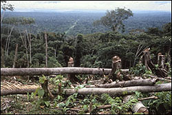 Trees being cleared in the Peruvian Amazon