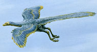 Illustration of Archaeopteryx flying