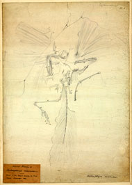 Archaeopteryx lithographica fossil sketch from Richard Owen's 1863 paper on Archaeopteryx