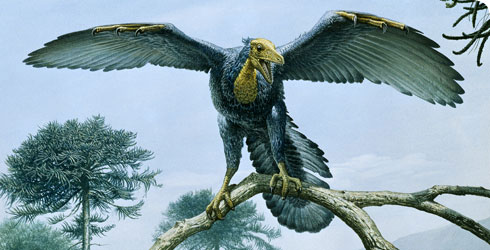 Illustration of what Archaeopteryx might have looked like
