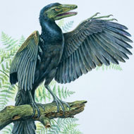 Illustration of how Archaeopteryx might have looked