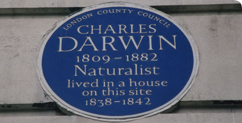 A blue plaque on one of Darwin's London homes © Robert Siegel Md, PhD, Standford University