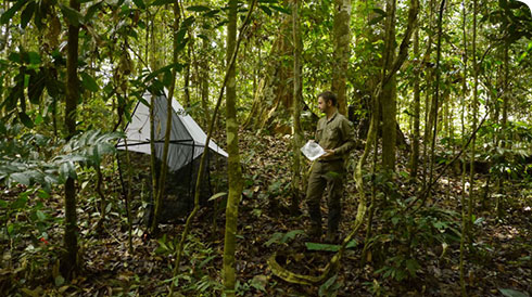 Museum scientist with a Malaise Trap in the Borneo rainforest